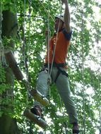 Picture of high ropes course in a forest