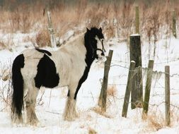 black and white horse near the fence