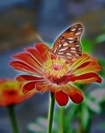 brown butterfly on bright zinnia