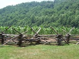 green corn field behind wooden fence