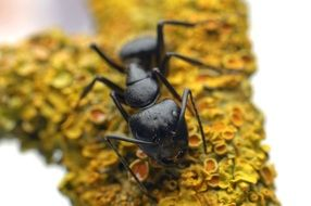 black beetle on a yellow plant close-up