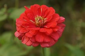 Wonderful Red flower bloom