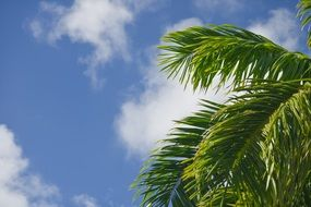 Green palm Tree branch Cloud sky view