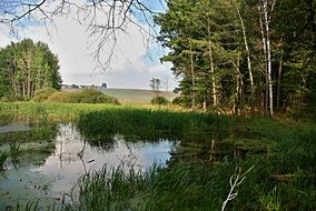 forest pond landscape in South Bohemian region