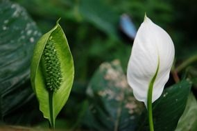 white flower of an exotic plant