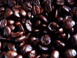 brown glossy coffee beans