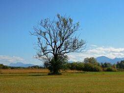 tree on the meadow in upper bavaria