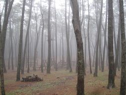 Forest on Jeju Island