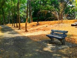 lonely bench in a beautiful park