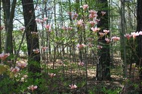 wild pink flowers in a thicket