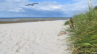 A seagull flies over the coast with white sand