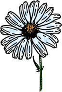 daisy flower plant painted