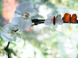 Orchid and two butterflies