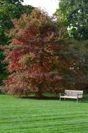 bench in trees autumn park red leaves