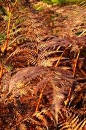 dry fern leaves in the forest