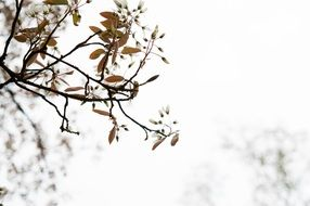 tautumn tree branch sky view