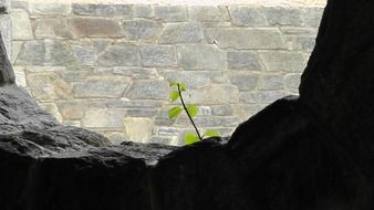 plant on a stone