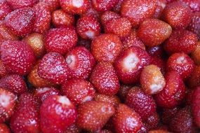 harvest of red sweet strawberries