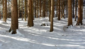 winter snowy forest