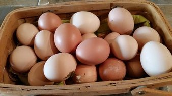 Eggs in a wooden basket
