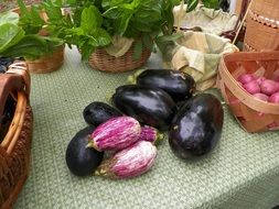 organic eggplant vegetables on the kitchen table