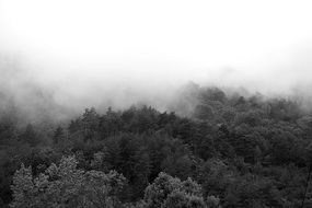 mystical fog over gray forest