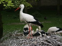 stork nest in the forest