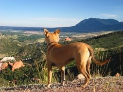 red dog stands on a hill