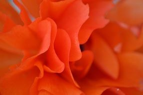 tender flower orange petals