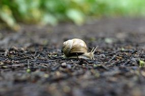 snail forest ground shell nature