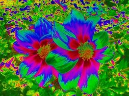 colorful dahlia flower graphic