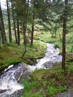 panoramic view of a stream in a forest in norway