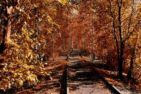 railroad through golden autumn forest