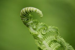 Young fern leaf on a green background