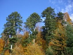 mixed forest autumn