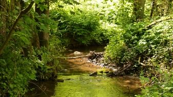 stream among green thickets