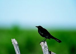 black bird on a tree trunk