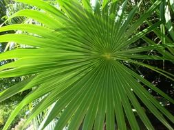 green tropical palm leaves