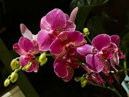 Pink orchid flowers in a pot