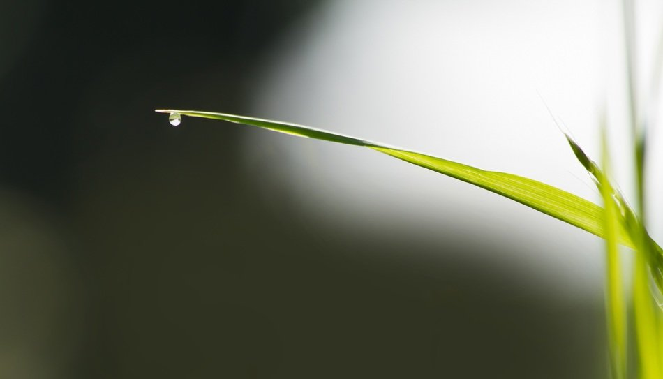 water drop on the grass blade