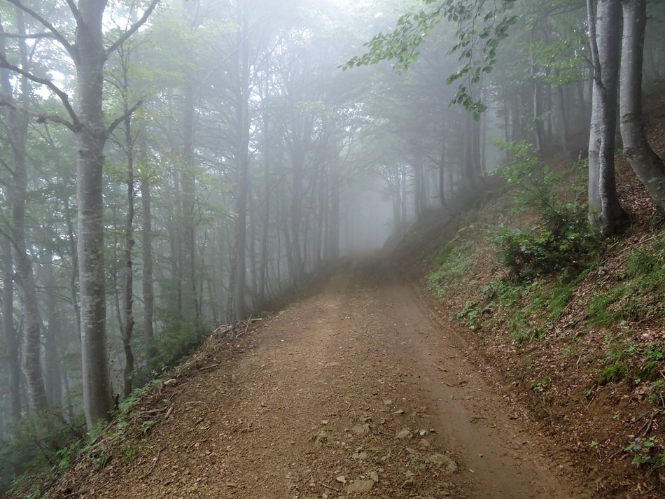 foggy forest trail scenery