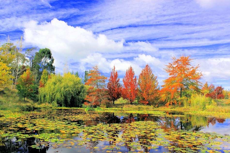 autumn forest near lake colorful landscape