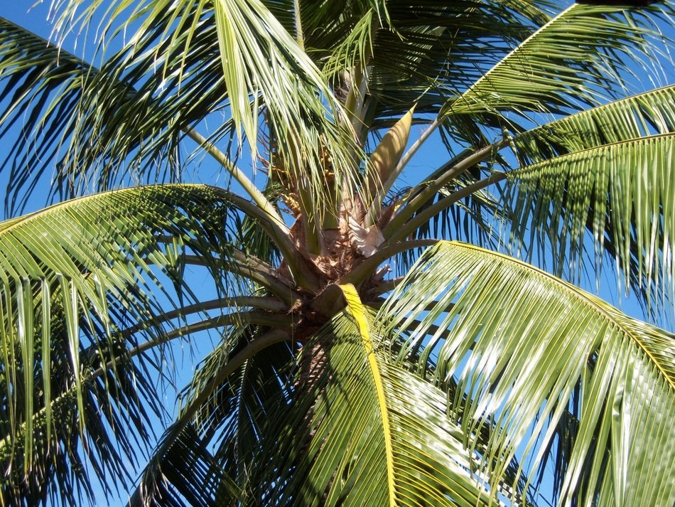 green palm on the Caribbean