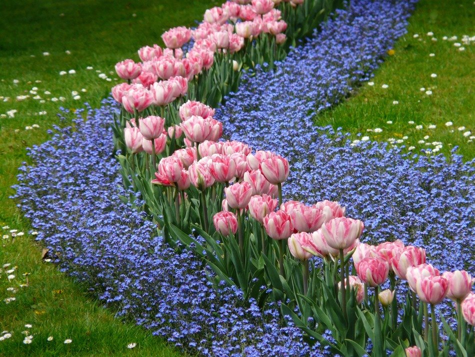 pattern with tulips and blue flowers in the park