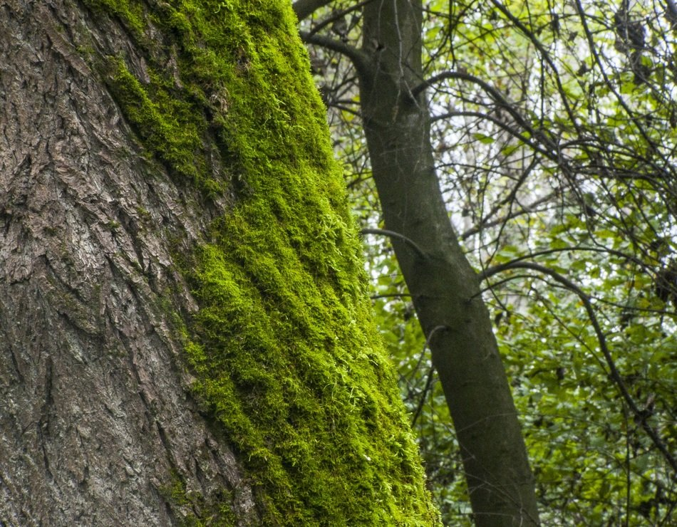 green moss on tree trunk in forest at summer