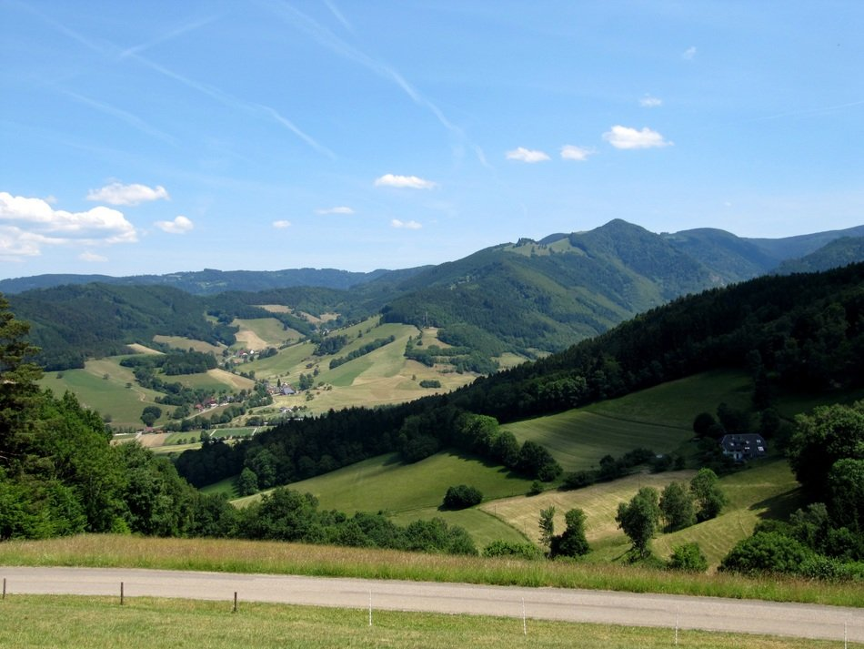 black forest on the high valley