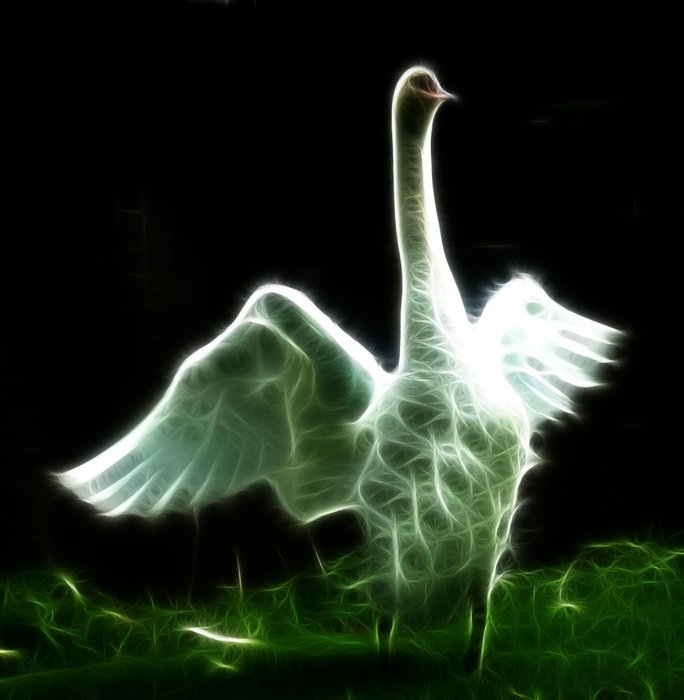image swan with photoshop