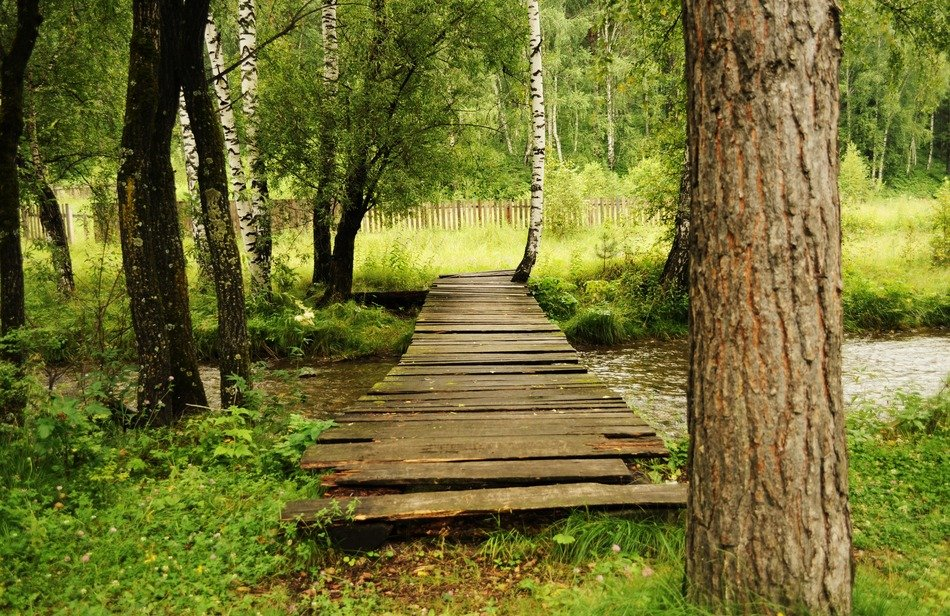 wooden flooring through a forest river