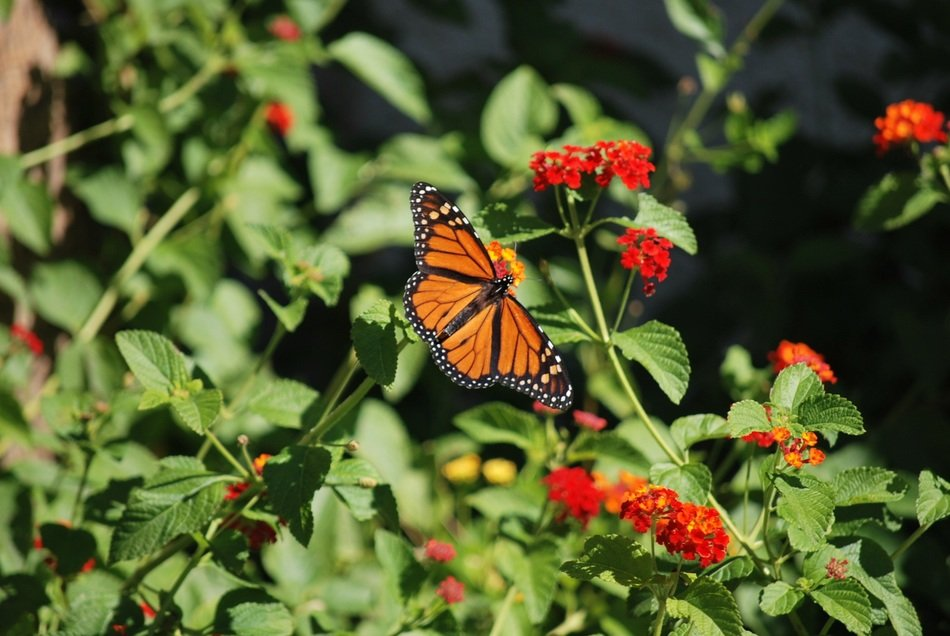 plant flowers and butterfly outdoor