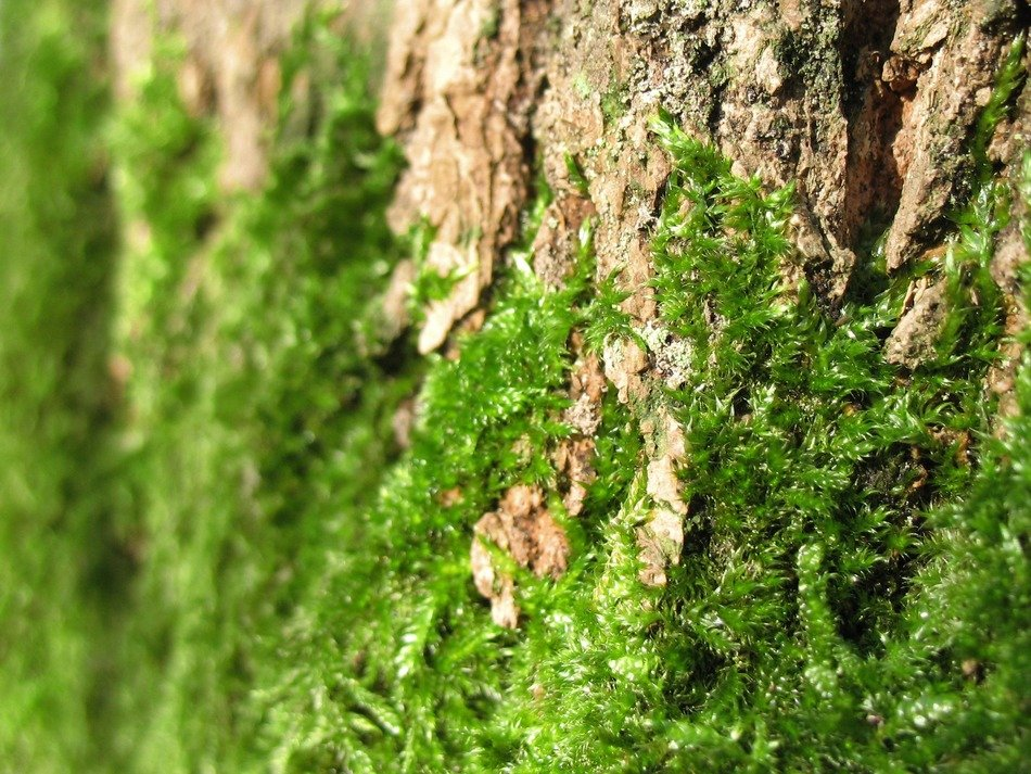 green wild moss at the foot of a tree